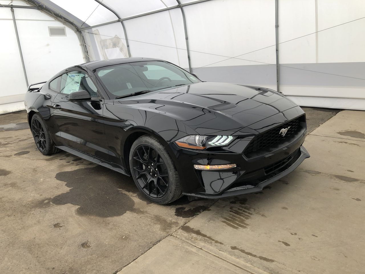 2018 Ford Mustang Ecoboost (0N6223) Main Image